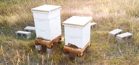 When to Choose a Bee Stock